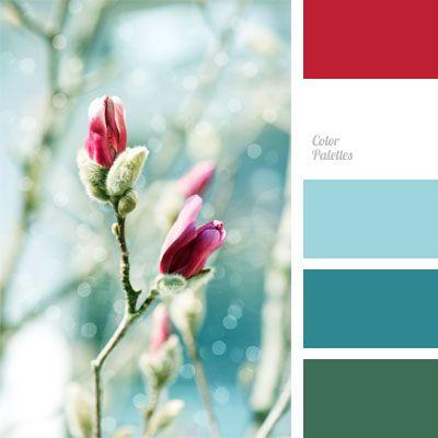 color of fuchsia