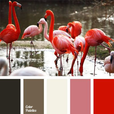 color of flamingo feathers