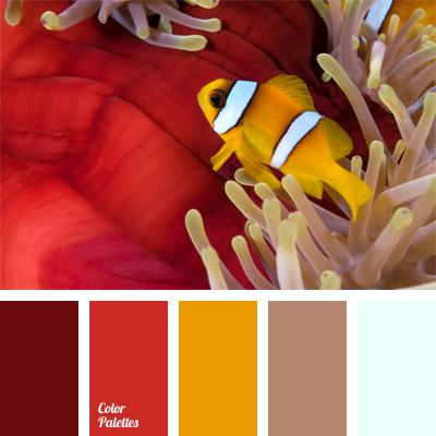 colors of clown fish color palette ideas
