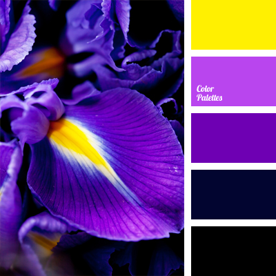 egg-plant color | Color Palette Ideas