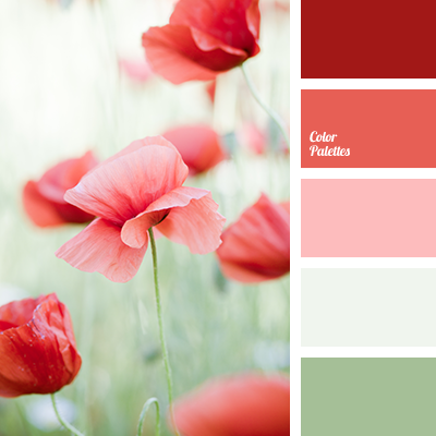 Colour of red poppies color palette ideas Red and pink colour combination