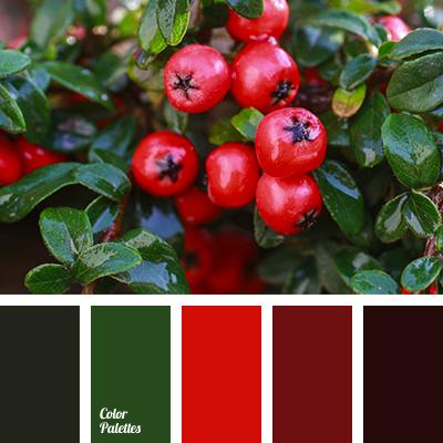 berries color