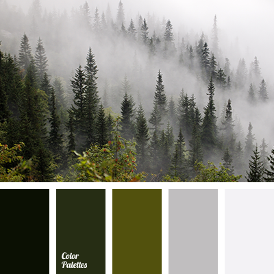 misty forest colors