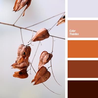 brown shades