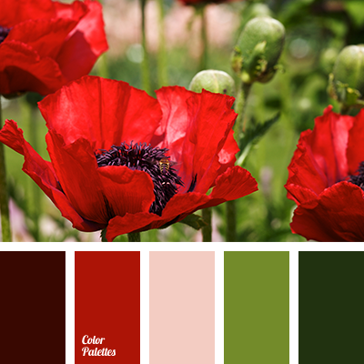 color of poppies