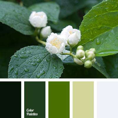 Color Of Green Apple Color Palette Ideas