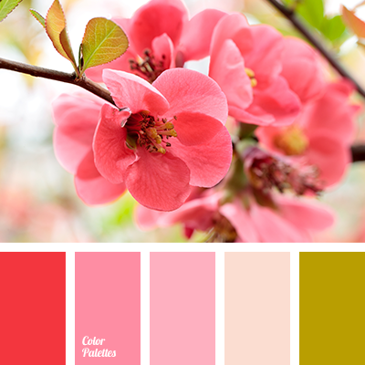 Bright shades of cherry blossoms