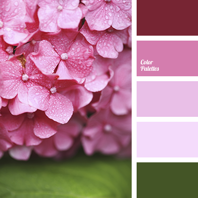 Color of hydrangea