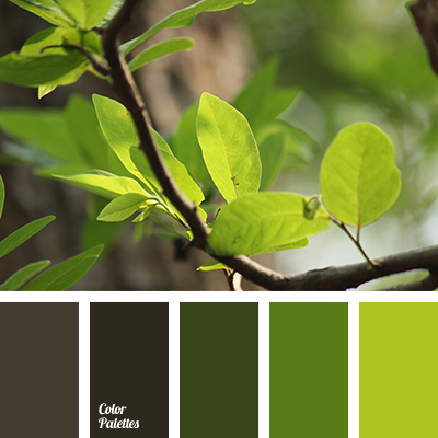 Bay leaf color