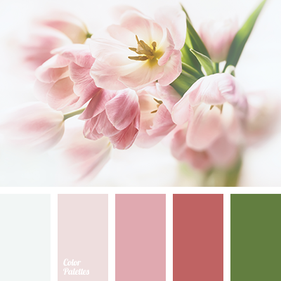 Color of pink tulips