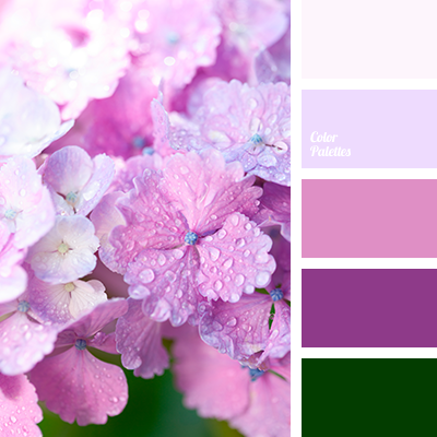 Purple And Pink Violet