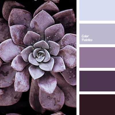Shades of lavender color